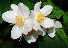 Gambar Bunga Cantik Indah Terlengkap Dosenpintar Co Id