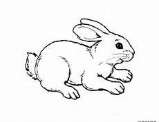 Malvorlagen Tiere Gratis Ausdrucken Print Out Animal Rabbit Pictures Colouring Pages For