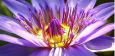 nomi di fiori esotici fiori esotici la top 5 dei pi 249 belli di fiori e