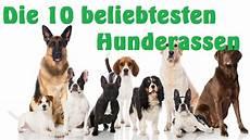mit hund die 10 beliebtesten hunderassen hd