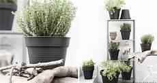 Blumenkübel Winterfest Machen - kr 228 uter und pflanzen 252 berwintern gewusst wie sch 246 n bei