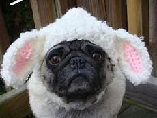 hund mit mütze m 252 tzen f 252 r hunde warme hundekleidung f 252 r den winter