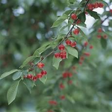 arbuste fruit quels arbres planter en octobre