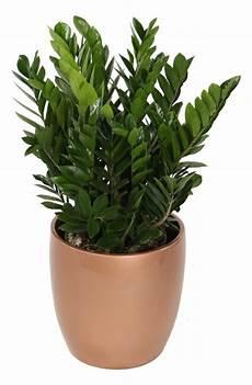 welche pflanzen brauchen wenig licht welche zimmerpflanzen brauchen wenig licht