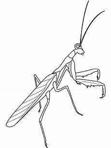 Malvorlagen Insekten Jelent Malvorlage Insekten Insekten Insekten