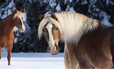 welche pferderasse passt zu mir welches pferd passt zu mir