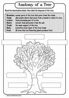 science worksheets plants grade 3 12350 anatomy of tree