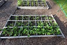 erdbeeren pflanzen erdbeeren aus dem eigenen garten