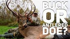 is it a buck or doe with antlers the caitlyn buck s8 60