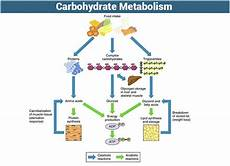 Diagram For Food That Are Carbohydrate by Carbohydrate Metabolism An Overview Of Its Metabolic Process