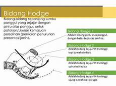 Anatomi Dan Fisiologi Alat Reproduksi