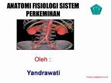 Anatomi Struktur Ginjal Kiri Dan Gambar Nefron Kanan