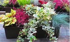 balkonpflanzen herbst winter fr 252 hling mit blumenk 228 sten wohnideen balkon pflanzen