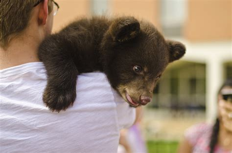 Rabies Scare After Bear Bites Washington University St