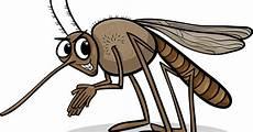 werden mücken vom licht angezogen internetapotheke parcelmed m 252 ckenschutz und m 252 ckenmittel