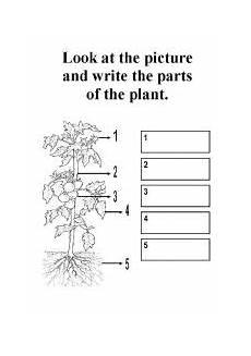 parts of plants kindergarten worksheets 13581 parts of a plant esl worksheet by kerem