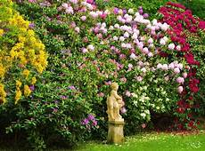 20 inspirational garden flower photos garden club