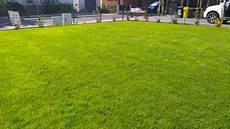 Rollrasen Verlegen In Hannover Gartenpflege