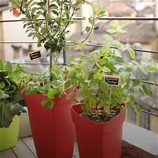 Les Arbres Fruitiers Croquez La Vie Conseil Jardin