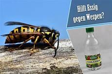 Hilft Essig Gegen Wespen Vertreibt Essiggeruch Wespen