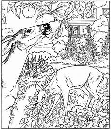nature coloring pages 16353 nature coloring pages for adults parts of a plant coloring page coloring pages for adults
