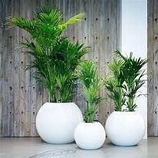 pflanzen für wohnzimmer die besten 25 wohnzimmer pflanzen ideen auf