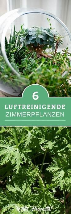 luftreinigende pflanzen fürs schlafzimmer 6 luftreinigende zimmerpflanzen pflanzen
