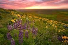Flower Valley Wallpaper by 10 Flower Valleys In Around The World That Ll Make
