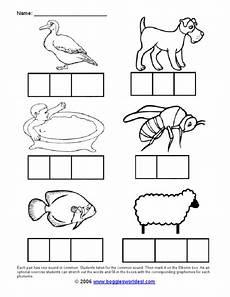 elkonin box animals worksheet for 1st 2nd grade lesson planet