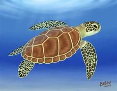 green sea turtle art by breah