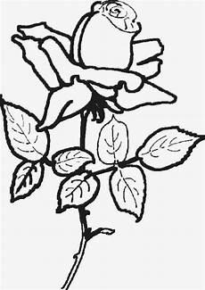 Blumen Malvorlagen Gratis Blumen Malvorlagen
