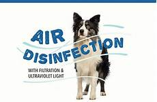 air disinfection with filtration ultraviolet light pet boarding and daycare magazine