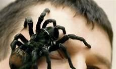 angst vor spinnen wenn spinnen angstattacken ausl 246 sen