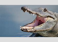 alligators in south carolina map