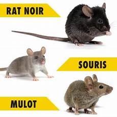 Kb Home Defense Blocs Appat Anti Rats Et Souris 240 Gr