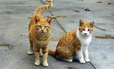 was sind haustiere 1000 interesting domestic animals photos 183 pexels 183 free