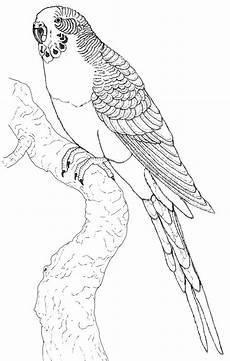 Ausmalbilder Kostenlos Zum Ausdrucken Papageien Papagei Bilder Zum Ausmalen Vogel Malvorlagen Bilder