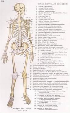 human skeletal system diagram labeled detailed human skeleton diagram goji actives diet