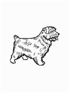 malvorlagen hunde gratis hund norfolk terrier ausmalbild malvorlage hunde