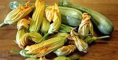 come cuocere i fiori di zucca frittata con fiori di zucca la ricetta dell estate