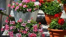 Balkonpflanzen Winterfest Machen Crafty