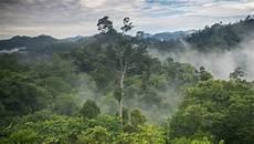 Sepanjang 2016 Sejuta Hektare Lebih Hutan Indonesia