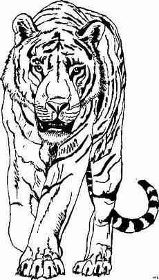 Malvorlagen Tiger Tiger Vorne 2 Ausmalbild Malvorlage Tiere