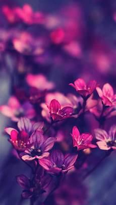 iphone purple flower wallpaper ios 8 flower wallpaper wallpapersafari