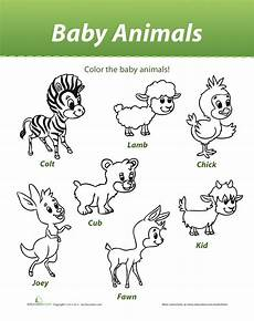 farm animals and their babies coloring pages 17434 and lara baby animals colouring sheet