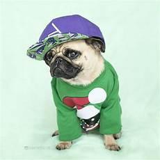 merry christmas pug style reposted from buddythepugster pugs pugsofinstagram pugstagram