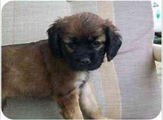 ADOPT ME!   Adopted Puppy   C0787   Macclenny, FL   Pug