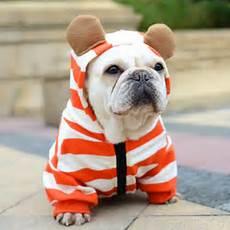 bulldog clothes for dogs redd aliexpress buy pet bulldog clothes orange