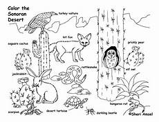 coloring pages ecosystem animals 16973 grassland animals coloring pages 1000 images about coloring habitats and animals on to