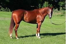 ponys zu verschenken pferde fohlen tieranzeigen